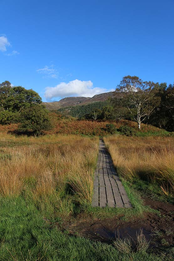 Path to Derwentwater from Manesty