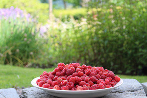 Raspberries from the garden